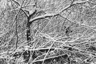 Twigs making shapes in the snow, Tim Lamerton Photography, Tim Lamerton