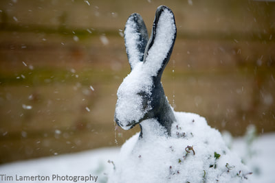 Frozen Hare statue in the snow,